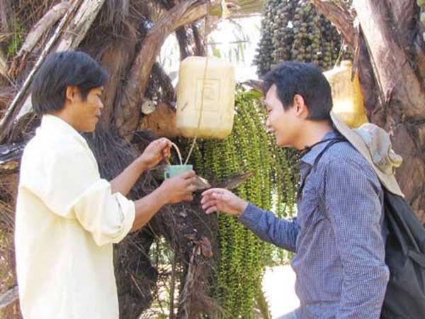 Cây tà vạt Quảng Nam